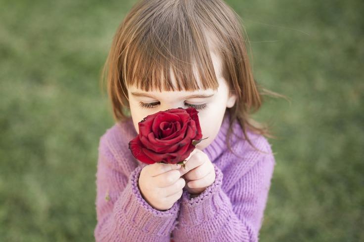rose-1963807_1920