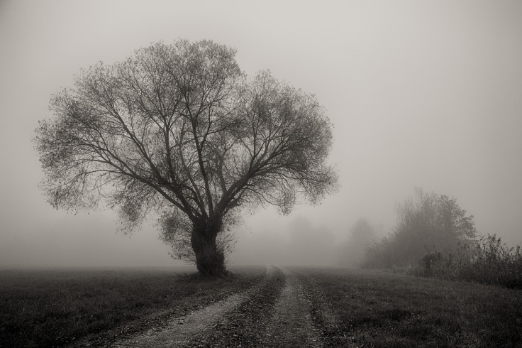 tree-3153571_1920